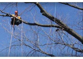 Montreal tree service Élagage M.C.
