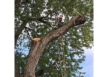 Montreal tree service Élagage M.C.
