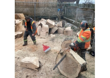 3 Best Tree Services In Montreal Qc Expert Recommendations