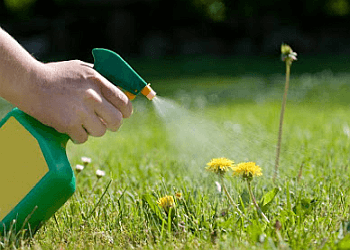 Mississauga lawn care service A+ Grass