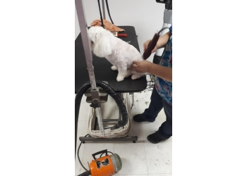 Trois Rivieres pet grooming A La Fantaisie Animale