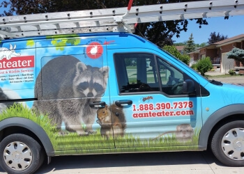 Oakville animal removal Aanteater Pest Control and Wildlife Services