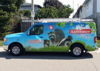 Hamilton animal removal Aanteater Pest Control and Wildlife Services Inc.