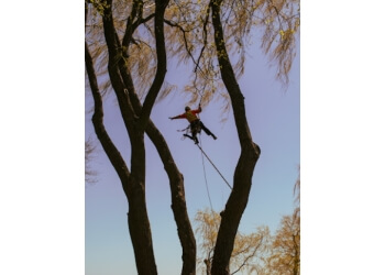 Whitby tree service Able Tree Service Inc.