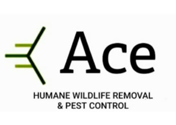 Oakville animal removal Ace Humane Wildlife Removal and Pest Control