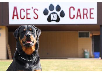 Prince George dog trainer Ace's K-9 Care