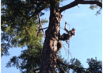 Nanaimo tree service Adair Tree Service