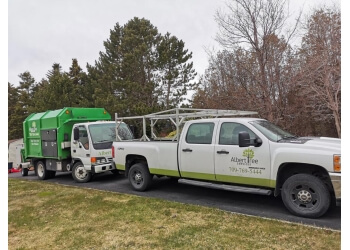 St Johns tree service Albert Tree Services
