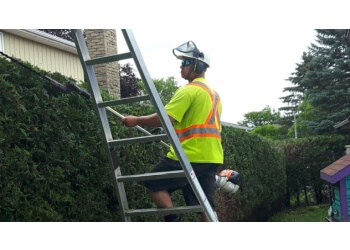 Newmarket tree service Alexander Tree Care