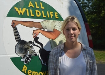 Barrie animal removal All Wildlife Removal Inc.