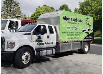 Aurora tree service Alpine Arborist