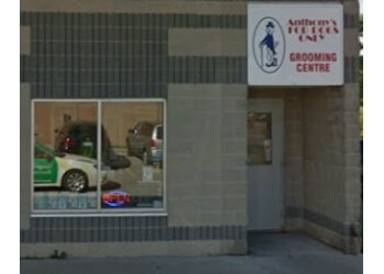 Niagara Falls pet grooming Anthony's For Dogs Only