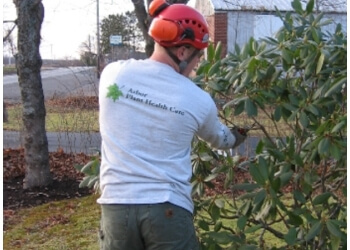 Halifax tree service Arbor Plant Health Care