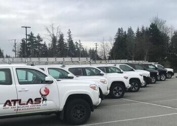 Langley pest control Atlas Pest and Wildlife Control ltd.