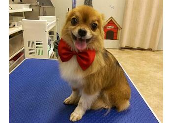 Coquitlam pet grooming Austin Dog Grooming
