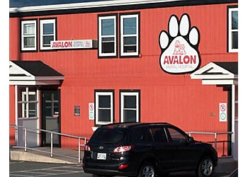 St Johns veterinary clinic Avalon Animal Hospital