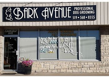 Kitchener pet grooming Bark Avenue Grooming