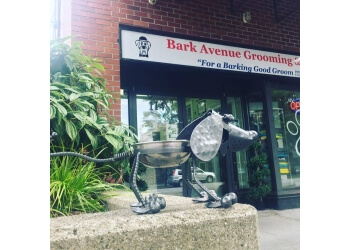 North Vancouver pet grooming Bark Avenue Grooming & Bath