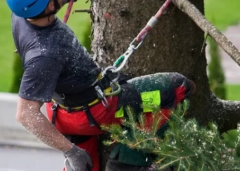 Ajax tree service Bark Tree Service