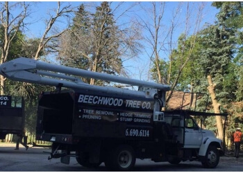 Brampton tree service Beechwood Tree Co.