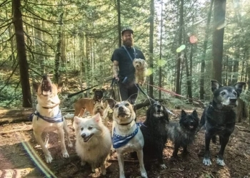 Vancouver dog walker Biscuits Pet Services