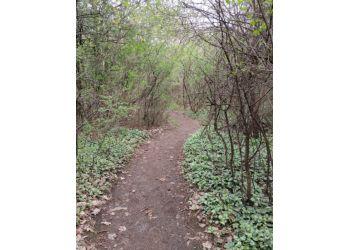 Gatineau hiking trail Boucher Forest