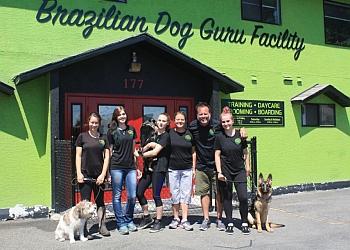 Kamloops dog trainer Brazilian Dog Guru Facility