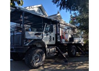 Abbotsford tree service Bruinsma Tree Service
