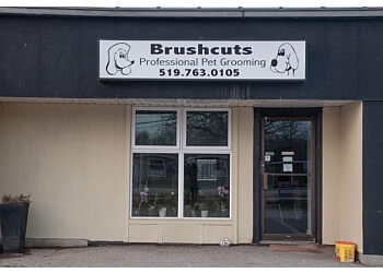 Guelph pet grooming Brushcuts Professional Pet Grooming