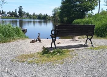 Langley public park Brydon Park