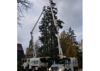 London tree service CLC Tree Services