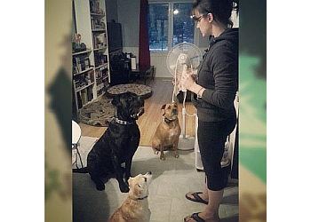 Oshawa dog trainer Canine Citizen