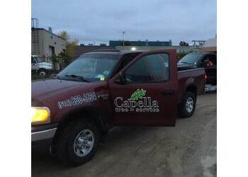 Guelph tree service Capella Tree Service