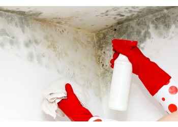 Markham carpet cleaning Carpet Cleaning Markham Pros