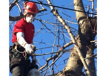 Toronto tree service Castor Tree Care