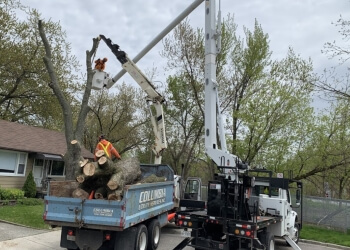 Windsor tree service Columbia Professional Arborists