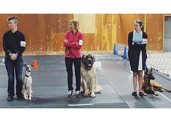 St Johns dog trainer Companion Dog Trainers Ltd