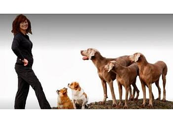 Victoria dog trainer Connective Training