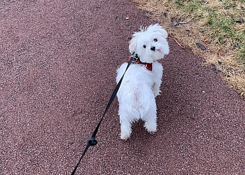 Montreal dog walker Copains Urbains