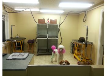 Belleville pet grooming Creative Clips Dog Grooming