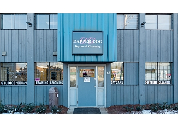 Port Coquitlam pet grooming Dapper Dog