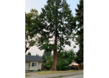 New Westminster tree service David's Tree Service