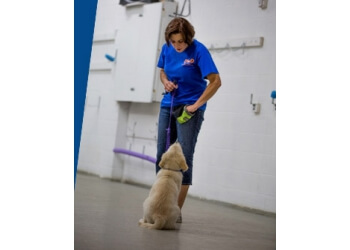 Oakville dog trainer Dealing With Dogs