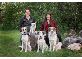 Saskatoon dog trainer Dog Ed. Dog Training and Pet Services