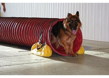 Doggie Central