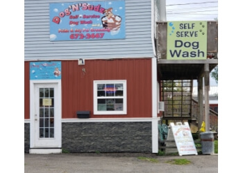 Saint John pet grooming Dog'n'Sudz