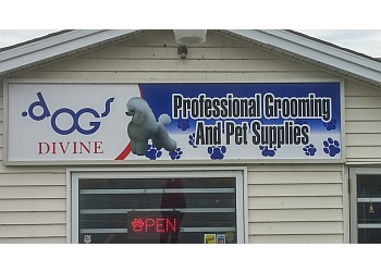 St Johns pet grooming Dogs Divine