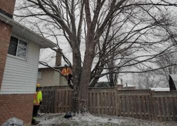 Welland tree service Driftwood Tree Service