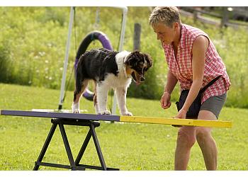 Stouffville dog trainer Drop The Leash