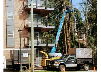 Burnaby tree service Dynamic Tree Services